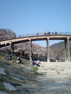 花見 錦帯橋